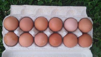 Bruna ägg 12 Pack