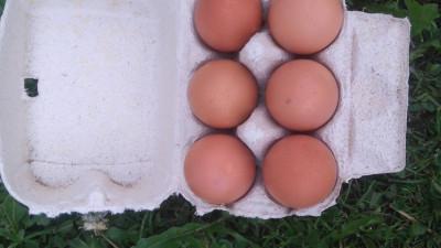 Bruna ägg 6 pack