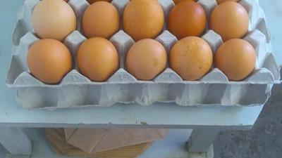 Flak 30 bruna ägg