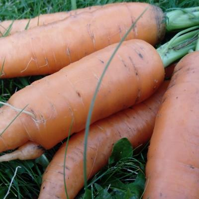 Morötter 1 kg