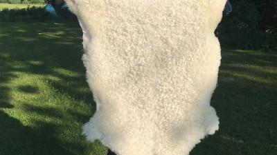 Lammskinn - Mellan, korthårigt, vitt