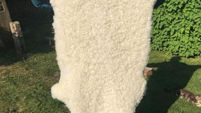 Lammskinn - Stort, korthårigt, vitt