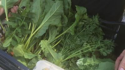 Säsongens grönsakslåda