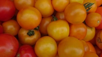 Färgglada tomater
