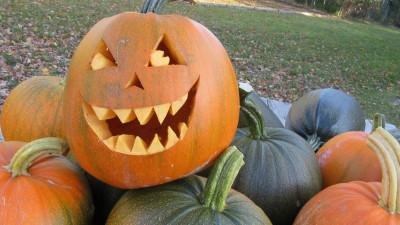 Halloween-pumpa, egenodlad, till lykta samt att tillaga goda måltider av innehållet