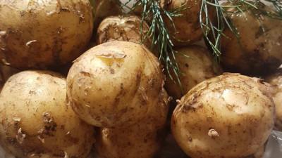 Färsk potatis