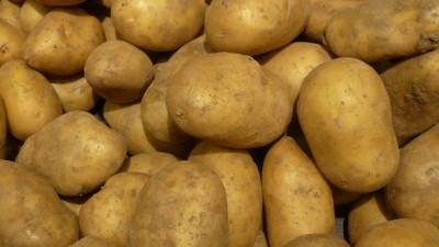 Potatis Bintje