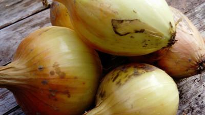 Gul Lök påse ca 500 gr, ekologisk