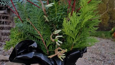 Växtarrangemang till prydnad (växter i oasis) eller till vas