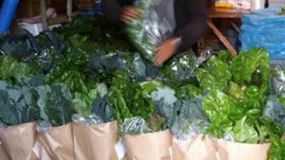 Grönsakskasse - Stor